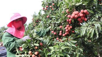 Chỉ dẫn địa lý: Công cụ hữu hiệu nâng cao giá trị nông sản Việt