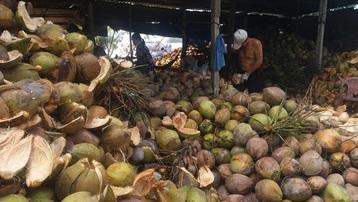 Bến Tre: Tích cực hỗ trợ, giải quyết đầu ra cho hàng hóa nông sản
