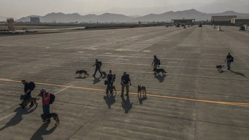 Quân đội Mỹ bị chỉ trích vì ưu tiên sơ tán chó nghiệp vụ khỏi Afghanistan
