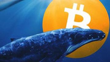 Một 'cá voi Bitcoin' vừa thức giấc sau gần 8 năm không hoạt động