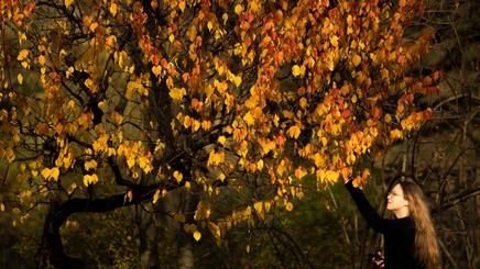 Ngỡ ngàng trước vẻ đẹp của mùa thu vàng nước Nga