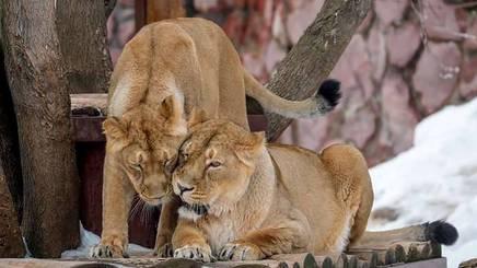 Vườn thú Moscow - một trong những vườn thú lâu đời nhất châu Âu