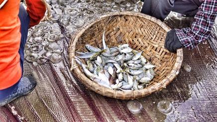 Những mẻ lưới ngập tràn cá tôm trong buổi bình minh ở biển Cửa Sót
