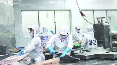 Xuất khẩu cá ngừ sang Ý tăng kỷ lục