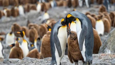 Tảng băng lớn nhất thế giới sắp va vào đảo cư ngụ của hàng triệu con chim cánh cụt