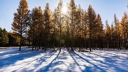 Vịnh mùa đông