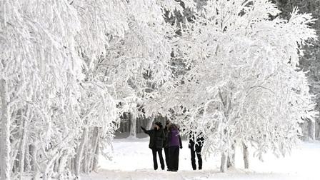 Băng tuyết trắng xóa bên sông Yenisei, Siberia, nước Nga