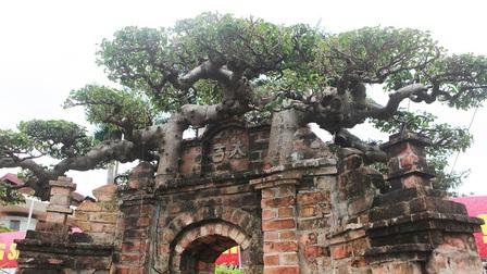 Tuyệt tác sanh cổ hình cổng làng tiền tỷ độc đáo, gợi nhớ làng quê xưa