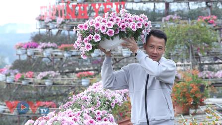 Các làng hoa Quảng Ninh vào vụ Tết