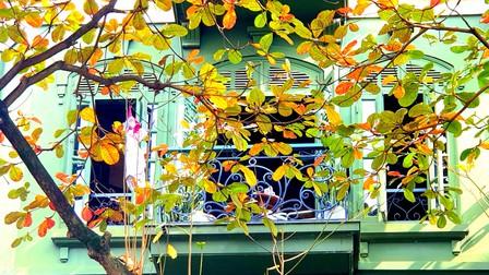 Hà Nội mùa bàng lá đỏ