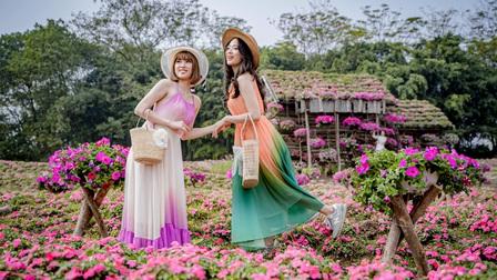 Cánh đồng hoa Ngọc Thảo Hồng nở rộ đẹp như tranh vẽ giữa lòng Hà Nội