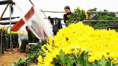 Người dân Tây Tựu 'ăn, ngủ cùng hoa' giữa đêm rét buốt