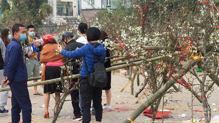 Hoa lê rừng đổ bộ xuống phố phục vụ người dân Thủ đô chơi Xuân