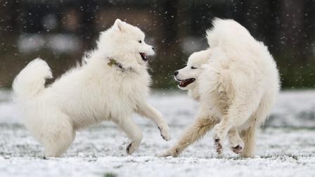 Không có gì gọi là giá lạnh, một số loài động vật vui vẻ khi tuyết rơi dày