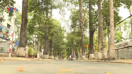 Trà Vinh – Thành phố giữa rừng cổ thụ