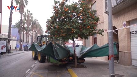 Tây Ban Nha: Máy kéo thu hoạch cam thu hút sự chú ý trên mạng xã hội