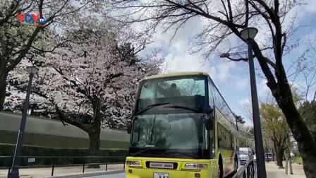 Tour ngắm hoa anh đào bằng xe buýt tại thủ đô Tokyo, Nhật Bản