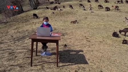 Italia: Lớp học trực tuyến trên núi cùng những chú dê