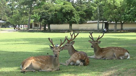 12 Nét Đẹp Vùng Kansai Nhật Bản: Công viên Nara
