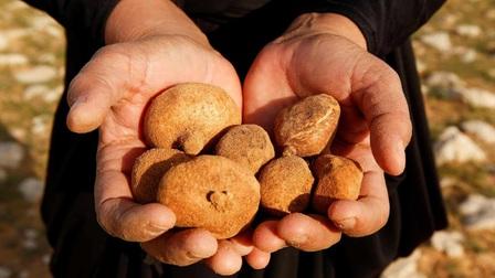 Loại nấm nào trên sa mạc khiến con người ta liều mạng tìm kiếm?