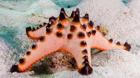 7 loài sao biển đẹp trên thế giới