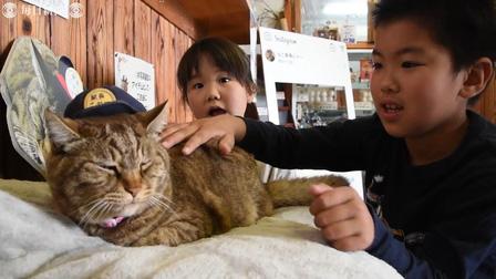 Chú mèo kỷ niệm 3 năm nhậm chức trưởng ga ở Nhật Bản