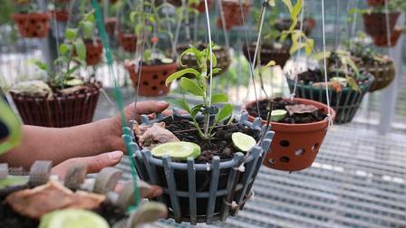 Hà Nội: Thông tin bất ngờ vụ 'chủ vườn lan ôm tiền tỷ bỏ trốn'