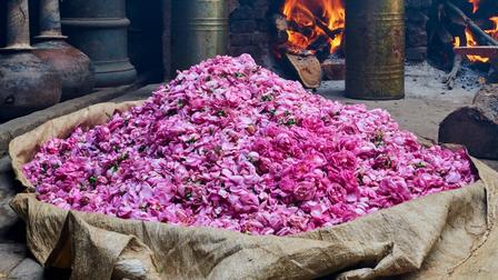 Một thị trấn cổ Ấn Độ ngập tràn hương thơm của hoa hồng