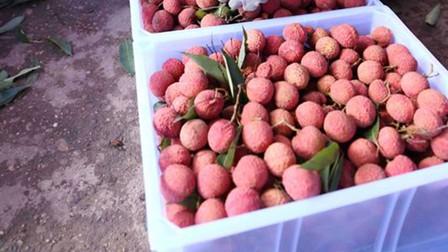 Thủ tướng Chính phủ chỉ đạo tháo gỡ khó khăn tiêu thụ nông sản cho Bắc Giang