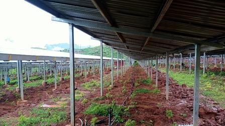Tỉnh Sơn La chỉ đạo gì với những tồn tại trong các công trình điện mặt trời mái nhà
