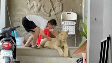 Bị tịch thu sư tử nuôi vì khoe trên Tiktok
