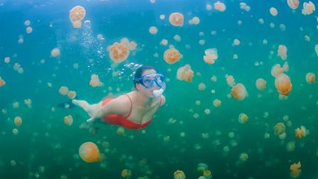 Trải nghiệm cực độc dành cho dân mạo hiểm: Bơi giữa hồ Sứa tồn tại từ kỷ băng hà
