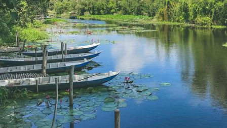 Về Làng nổi Tân Lập - Check-in đường xuyên rừng tràm đẹp nhất Việt Nam
