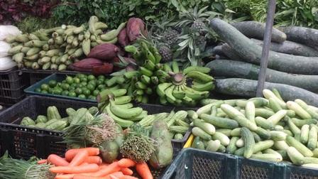 Xem xét mở điểm tập kết, trung chuyển nông sản tạm thời