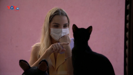 Quán cafe mèo ở Brazil