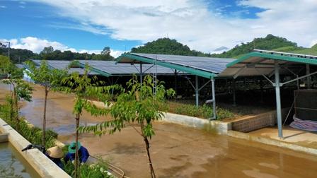 Cận cảnh trang trại nông nghiệp kết hợp điện áp mái ở Sơn La
