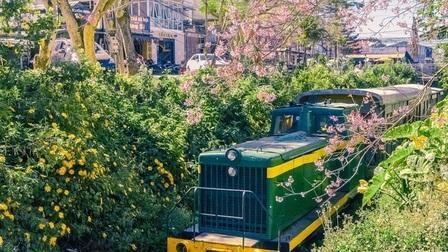 Ngẩn ngơ ngắm góc đường tàu ở Đà Lạt nên thơ như truyện tranh Nhật