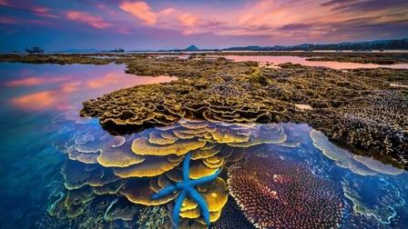 Hòn đảo xinh đẹp ở Phú Yên - nơi thỏa sức ngắm san hô mà không cần lặn biển