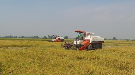 Bộ Công Thương kiến nghị cho thế chấp vay vốn bằng thóc, gạo hàng hóa