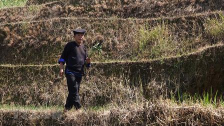 Yên Bái: Độc đáo lễ cúng ruộng của người Mông ở Mù Cang Chải