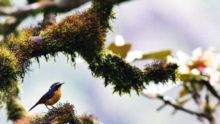 Núi Chúa và Kon Hà Nừng trở thành khu dự trữ sinh quyển thế giới
