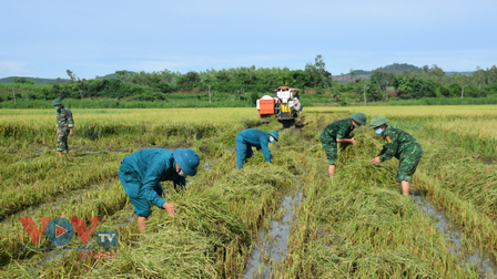Phú Yên: Bộ đội gặt lúa giúp người dân vùng giãn cách theo Chỉ thị 16