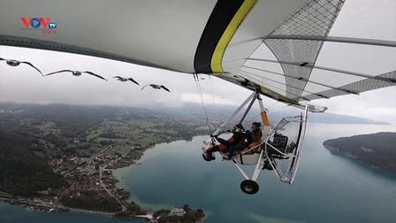 Trải nghiệm bay trên dãy núi Alps cùng đàn ngỗng