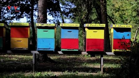 """Croatia: """"Khách sạn tổ ong"""" dành cho những người nuôi ong bận rộn"""