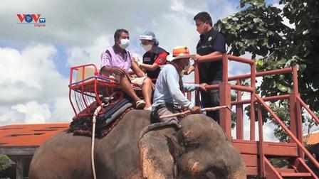 Thái Lan: Trải nghiệm tiêm vaccine trên lưng voi