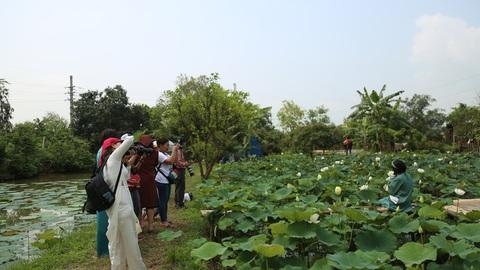 Hà Nội: Kiếm tiền triệu từ nghề trồng hoa sen trắng