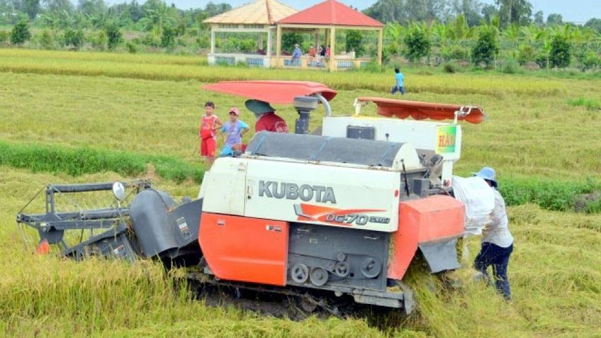 Giá xuất khẩu tănglàm 'ấm' thị trường lúa gạo miền Tây