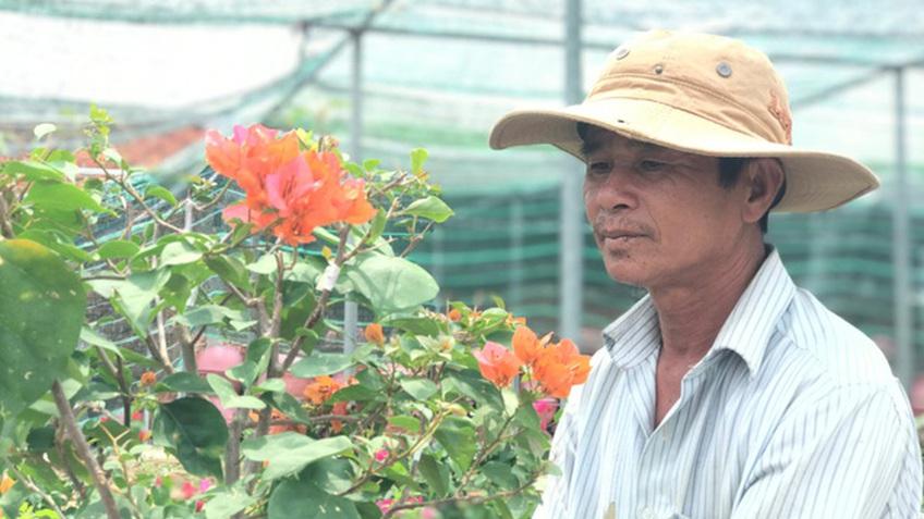 Bỏ phụ hồ về trồng hoa giấy, lão nông thu 500 triệu đồng mỗi năm