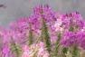 Sắc Xuân nơi vườn hoa bãi đá sông Hồng
